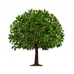 Baum zum Thema Nachhaltigkeit