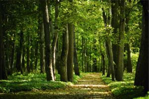 Wald zum Thema Nachhaltigkeit